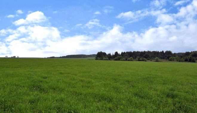 View from Plot