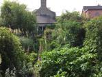 Summer Garden Alt