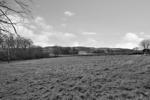 Paddock view 2