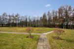Community Garden - View from Rear Door
