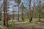 Adjacent Woodland