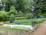 Productive vegetable plot
