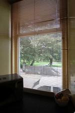 Window Overlooking Victoria Park