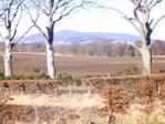 View to Bennachie