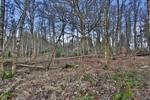 5 Acres of Woodland